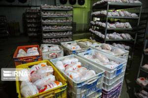 توزیع مرغ در کرمانشاه با استفاده از سیستم هوشمند کنترل میشود
