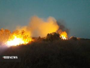 مهار آتشسوزی در منطقه حفاظت شده حله در بوشهر