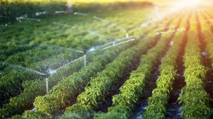 استان کرمانشاه قطب تولید محصولات کشاورزی است