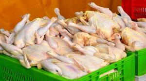کشف عرضه خارج از شبکه ۱۴۲ تن مرغ در مازندران