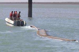 کشف محموله سنگین قاچاق در آبهای جنوبی کشور