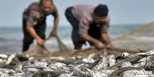 قتل عام آبزیان دریای خزر با شیرابه