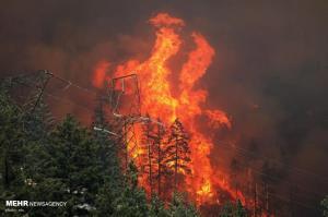 عکس/ جهنم کالیفرنیا؛ آتش سوزی گسترده در جنگل ها