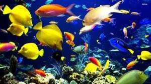 ماهیان زینتی اردبیل صادر میشوند