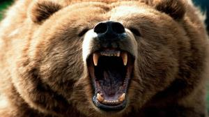 حمله خرس وحشی به ۲ مرد کوهرنگی