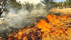 آتش سوزی در تنگراه؛ وزش باد شدید مانع از مهار آتش