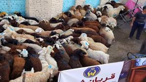 اهدای ۷۳۸ رأس قربانی برای نیازمندان خراسان شمالی