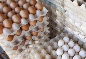 کشف تخممرغهای خارج از شبکه توزیع در سرخه