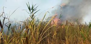 تداوم آتش سوزی در تالاب گروس مهاباد