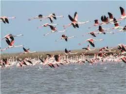 تابستان گذرانی ۲۸ گونه پرنده در تالابهای چهارمحال و بختیاری