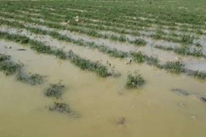 سیل ۶۳ میلیارد ریال به بخش کشاورزی لارستان خسارت زد
