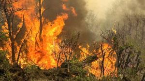 آتشسوزی در سیجان جاده کرج ـ چالوس