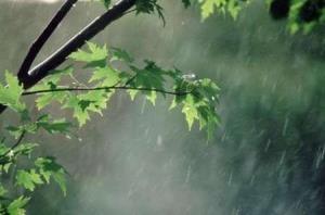 میانگین بارندگی در مشهد ۶۷ درصد کاهش یافت
