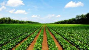 کاهش ۴۵۰ هزار تنی محصولات کشاورزی در اردبیل