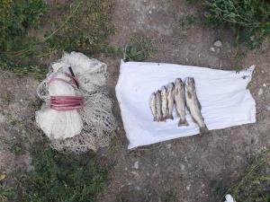 دستگیری ۵ متخلف شکار غیرمجاز در مازندران