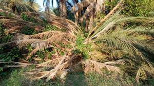 خسارت ٨ میلیارد تومانی توفان به زیرساختهای برق فارس