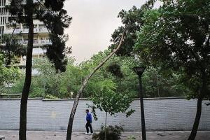 آغاز وزش باد شدید در مشهد
