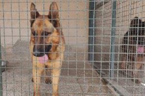 سگهای بدون صاحب اهواز صاحب خانه میشوند