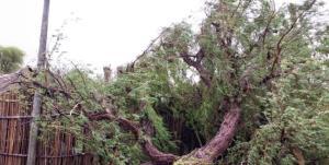 طوفان به پارسیان ۲۰ میلیارد تومان خسارت زد