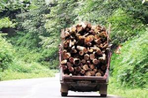 کشف ۴۸ تن چوب و زغال بلوط در اصفهان