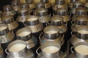 خام فروشی ۸۰ درصد شیر تولیدی خراسان جنوبی