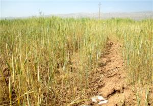 خسارت ۳۱۰۰ میلیاردی خشکسالی به کشاورزان چهارمحال و بختیاری