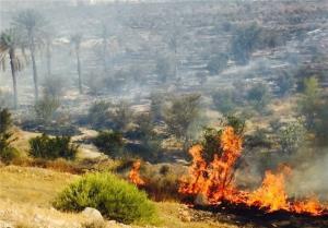 آتش سوزی ۲۰۰ متر از یک باغ مرکبات در میناب