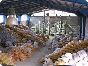 آمادگی شالیکوبیهای گیلان با شروع برداشت برنج