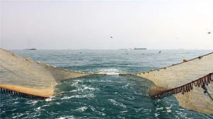 زمان آزادسازی صید میگو در بوشهر، هفته آینده اعلام شود