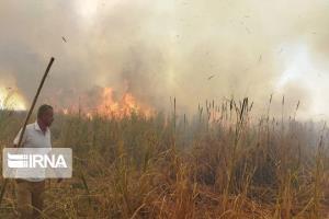 ۳۰ هزار هکتار عرصههای مهدیشهر در وضعیت فوقبحرانی آتشسوزی قرار دارد