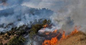 ۱۰۳هکتار از جنگلهای مریوان در آتش سوخت