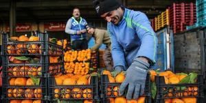 شرایط خرید آنلاین میوه و تربار بهزودی در کرج فراهم میشود