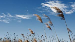 وزش باد عصرگاهی در فارس