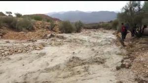 خسارت بارشها به بخش کشاورزی در فیروز آباد