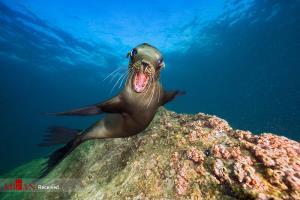 ژست های شیر دریایی
