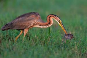 عکس های برگزیده از پرندگان در سال 2021