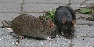 جولان موشها در ایلام
