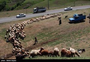 ایلراههای عشایری استان ایلام برای تسهیل تردد بازسازی شود