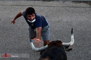 عکس های برگزیده هفته؛ لحظه تقابل نفسگیر با گاو وحشی