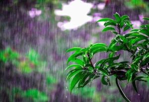 کاهش ۲۵ درصدی بارشها طی سال جاری در آذربایجانغربی