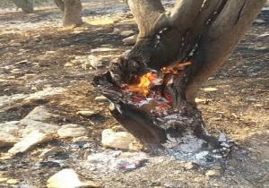 آتشسوزی جنگلهای کوه نور در کهگیلویه و بویراحمد مهار شد