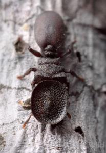 تصاویری جالب از مورچه جاسوس!