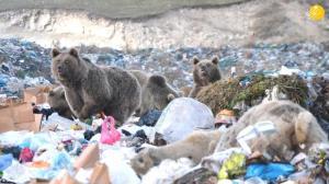 زباله گردی خرسهای قهوهای!