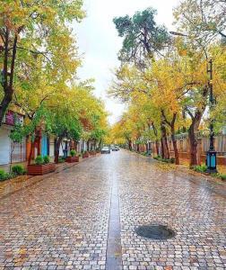 پاییز شیراز، خیابان طالقانی