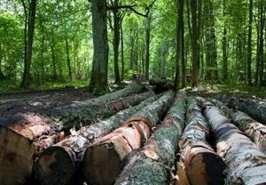 باند بزرگ قاچاق چوبهای جنگلی در مازندران منهدم شد