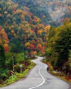 پاییز رنگارنگ در جنگل سیاهکَلِ دیلمان