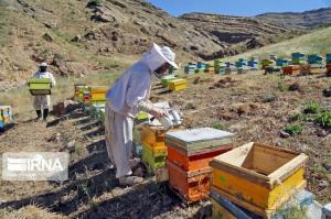 ۳ درصد عسل کشور در لرستان تولید میشود