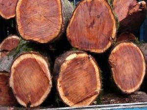 کشف ۱۰ تن چوب «اوکالیپتوس» قاچاق در قزوین
