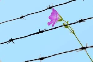 آزادی ۱۲ زندانی در پی بازدید سرزده هیات قضایی از زندان مرکزی یزد