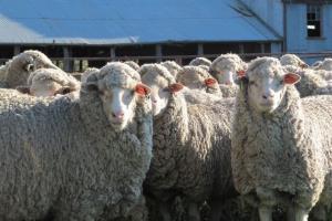 ناسا از پشم گوسفند فیلتر هوا میسازد!